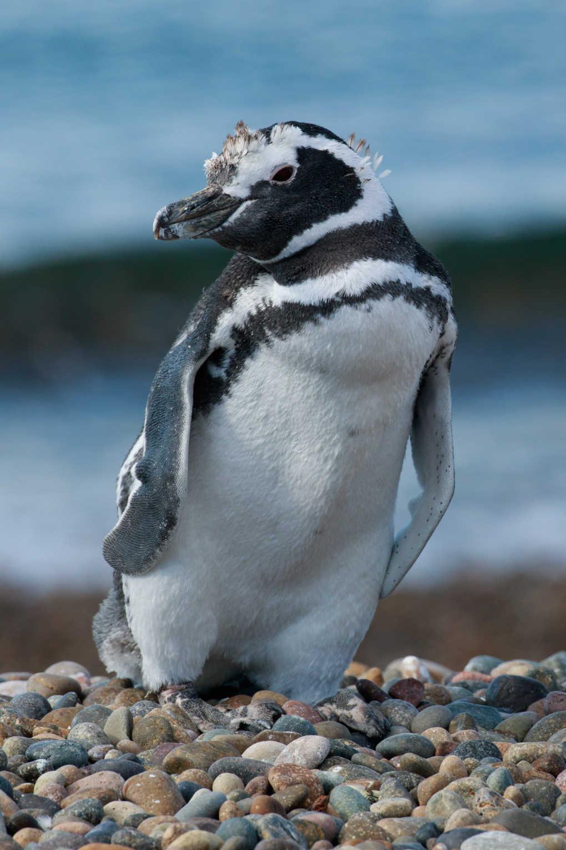 Patagonia - Tim Travel Tours