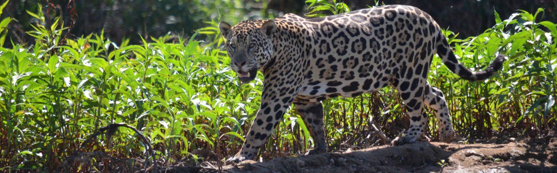 viaggi in Amazzonia